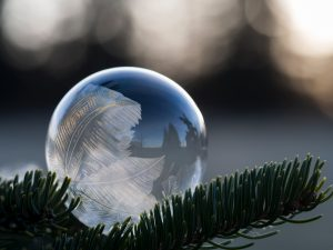 Droplet of water on a pine branch that has frozen, Conceal, or reveal?