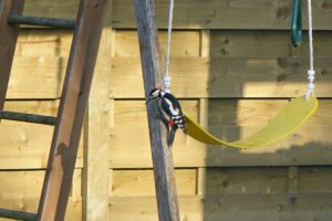 Black, white and red woodpecker on a wooden climbing frame. What haven't you seen?
