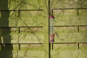 A nuthatch on a peanut bird feeder in front of a fence.  Don't let the squirrels get you down